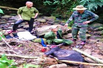 Hạt Kiểm lâm VQG Phong Nha – Kẻ Bàng phát hiện và bắt giữ đối tượng bẫy bắt, giết hại động vật rừng thuộc loài nguy cấp, quý, hiếm